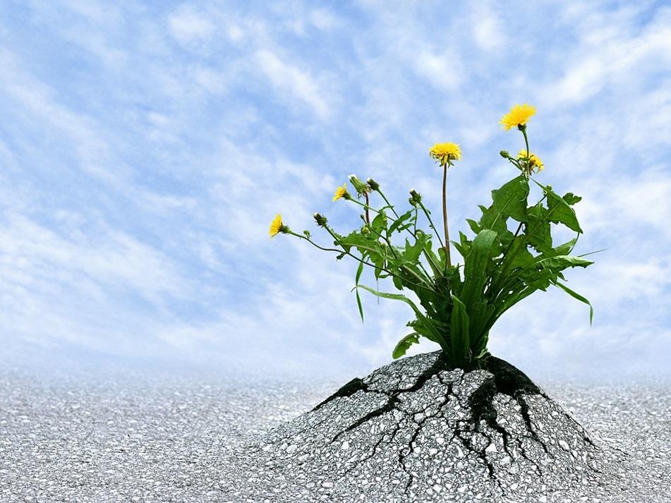 Resilienz in Führung Führung